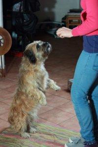 Bewegungstherapie beim Hund