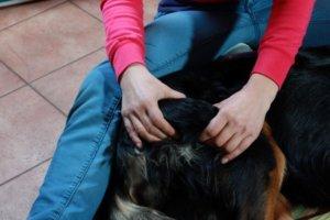 Klassische Massage bim Hund