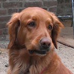 Tierphysiotherapie bei Hunden