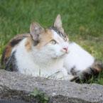 Tierphysiotherapie bei Katzen
