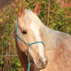 Tierphysiotherapie bei Pferden